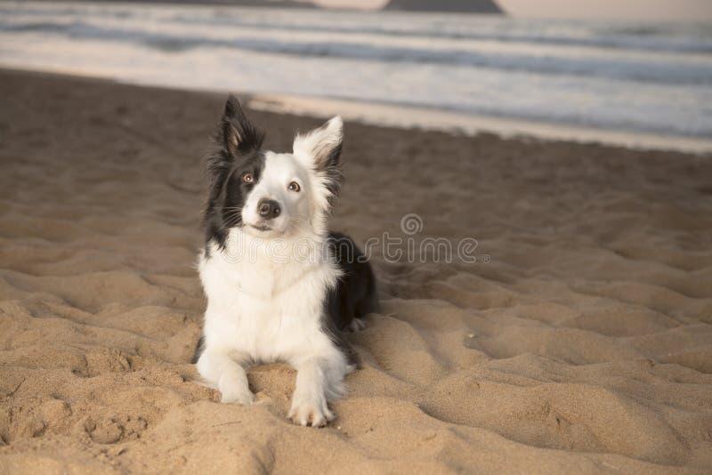 Border collie auf dem Strand lizenzfreies stockfoto