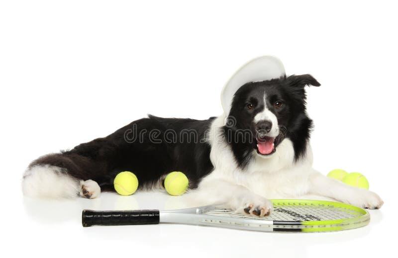 Border collie avec des balles de tennis et la raquette photos libres de droits