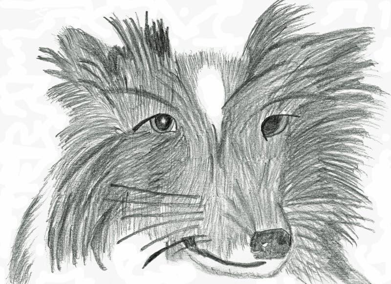 Border collie de pensamento - desenho de lápis ilustração royalty free