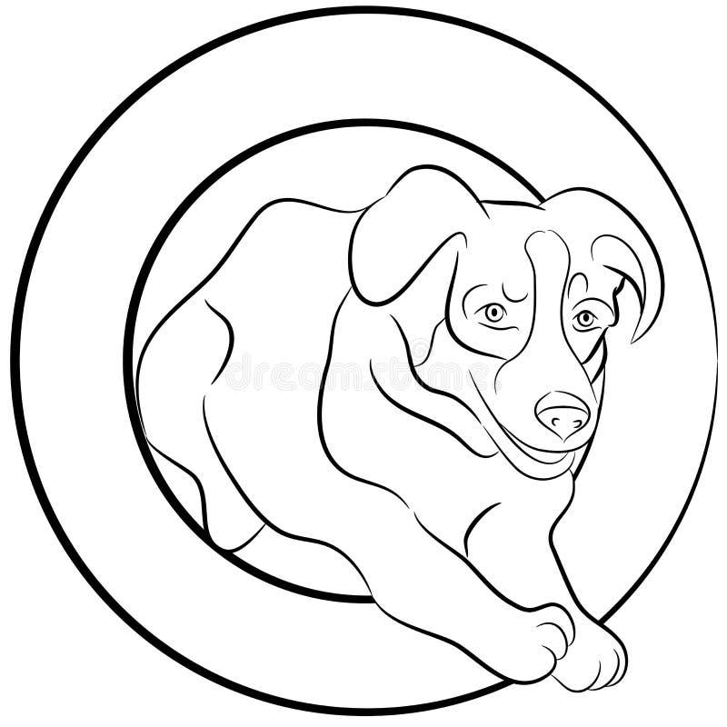 Border Collie Dog Jumping Through Hoop