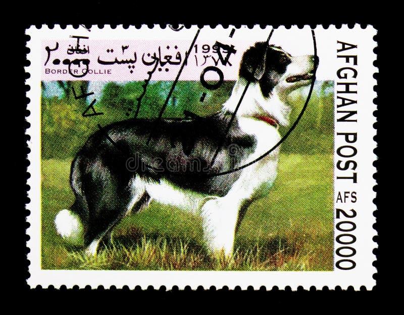 Border collie (familiaris) del lupus de Canis, serie de los perros, circa 1999 fotografía de archivo