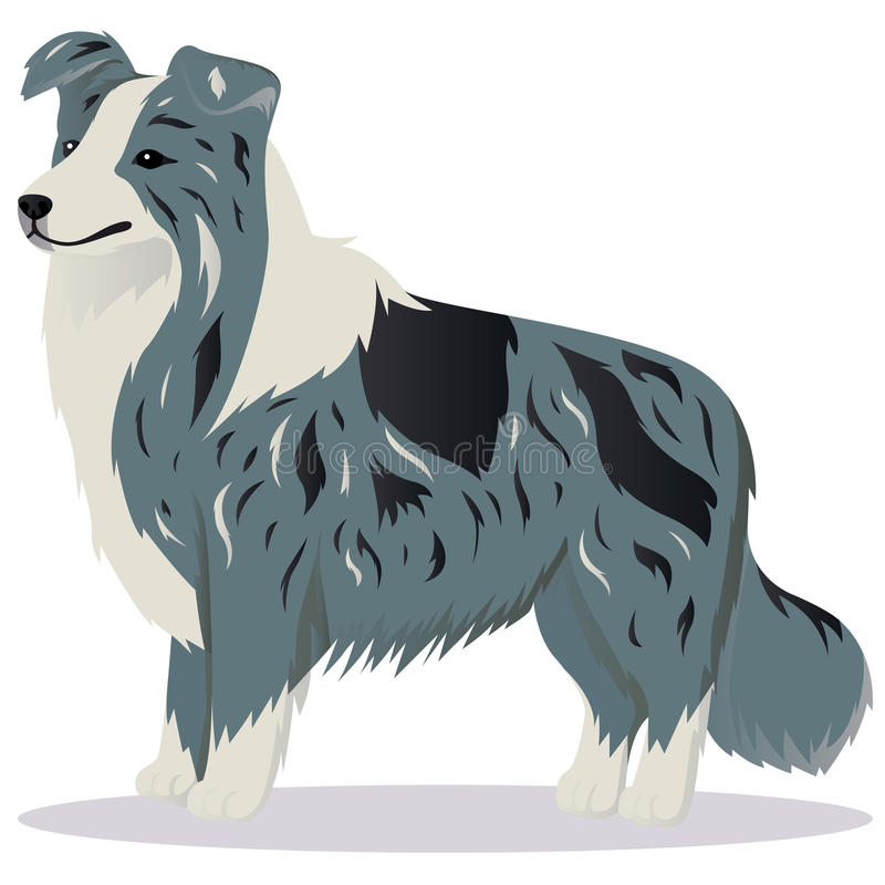 Border collie-Hundemarmor stock abbildung
