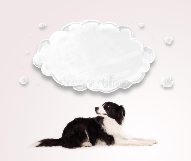Border collie lindo con la nube vacía imágenes de archivo libres de regalías
