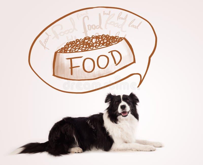 Border collie lindo que sueña sobre la comida fotografía de archivo