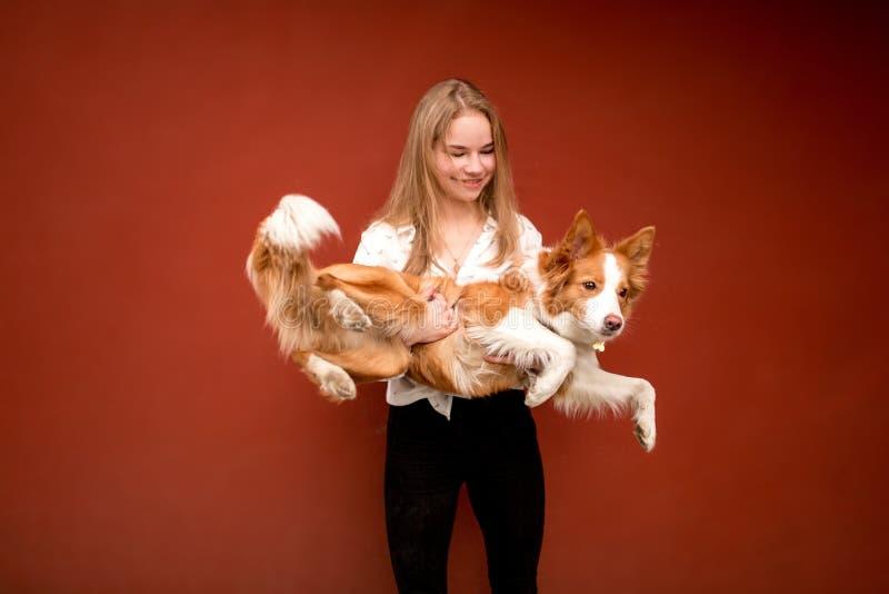 Border collie lindo rojo y blanco del perro en manos de la muchacha sonriente foto de archivo