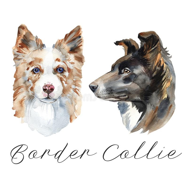 Border Collie. Portrait of a Dog. Cute puppy isolated on white background. Australian Shepherd. Hand drawn illustration. royalty free illustration