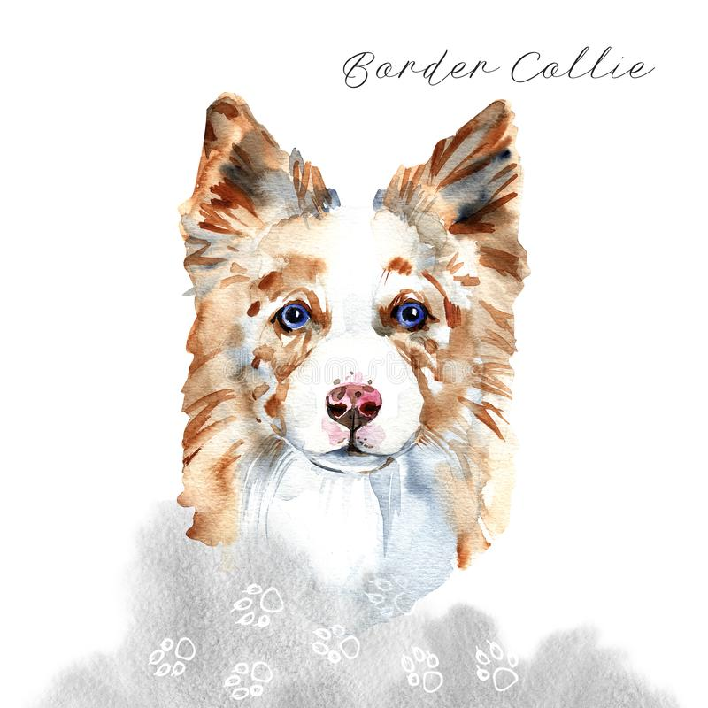 Border Collie. Portrait of a Dog. Cute puppy isolated on white background. Australian Shepherd. Hand drawn illustration. stock image