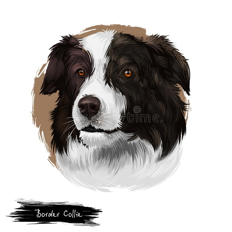 Border Collie, Scottish Sheepdog dog digital art illustration isolated on white background. United Kingdom origin herding dog. royalty free illustration