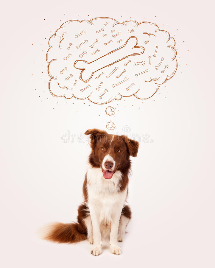 Download Border Collie With Thought Bubble Thinking About A Bone Stock Image - Image of idea, cloud: 33303573