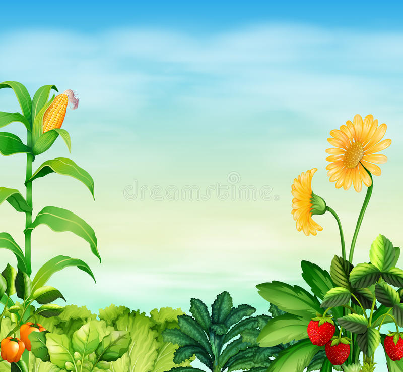 Border Design With Vegetables And Fruit Stock Vector ...