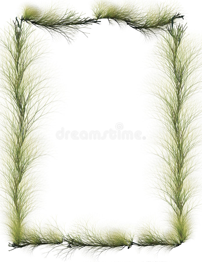 Download Border: Evergreen Branches stock image. Image of border - 5410827