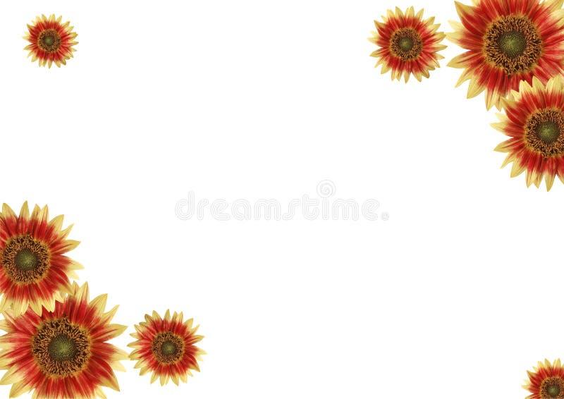 Border, flowers stock photography