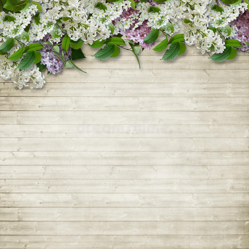 Border of flowers of lilac and bird cherry on wooden background stock image