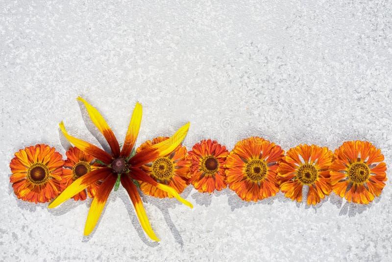 Border frame from autumnal orange flowers stock image
