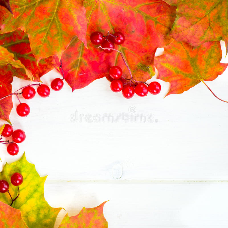 Border Frame of Colorful Autumn Leaves and Berries stock photography