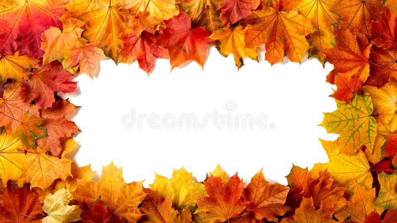 Border frame of colorful autumn leaves stock photos
