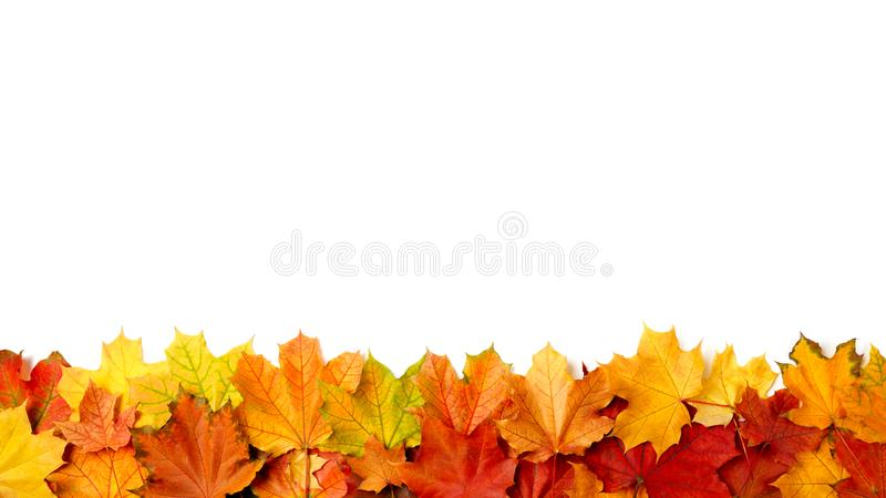 Border frame of colorful autumn leaves isolated on white royalty free stock image