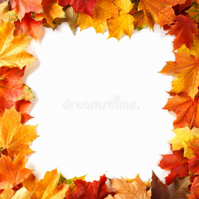 Border frame of colorful autumn leaves stock image
