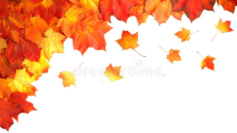 Border frame of colorful autumn leaves isolated on white royalty free stock photo