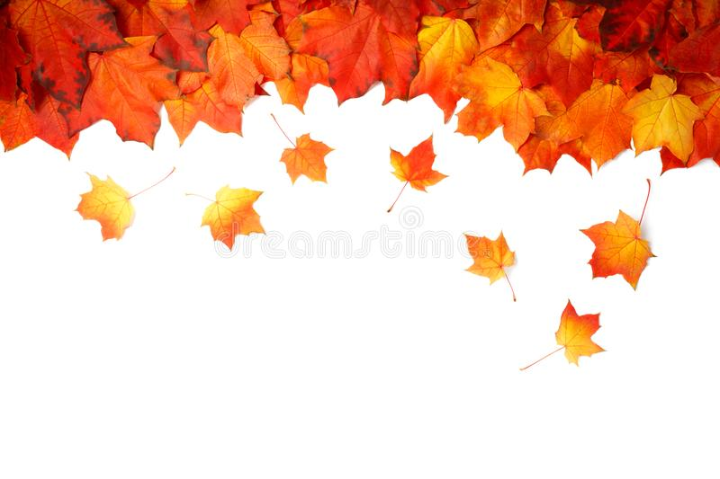Border frame of colorful autumn leaves isolated on white royalty free stock images