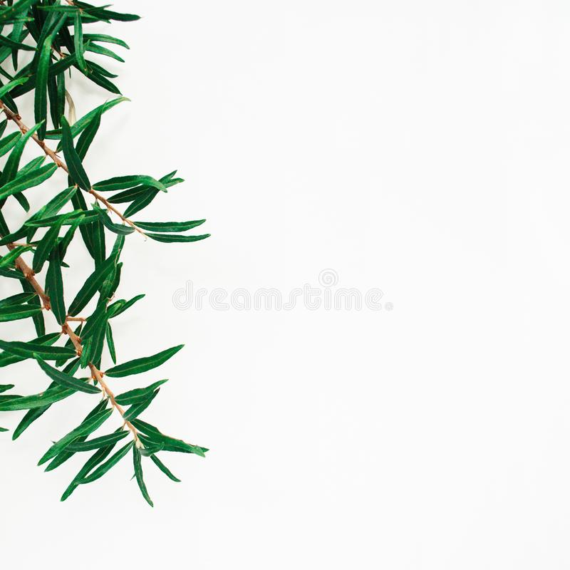 Border frame made of sea buckthorn branch on a white background. Minimal floral composition with copy space. Border frame made of sea buckthorn branch on a stock images