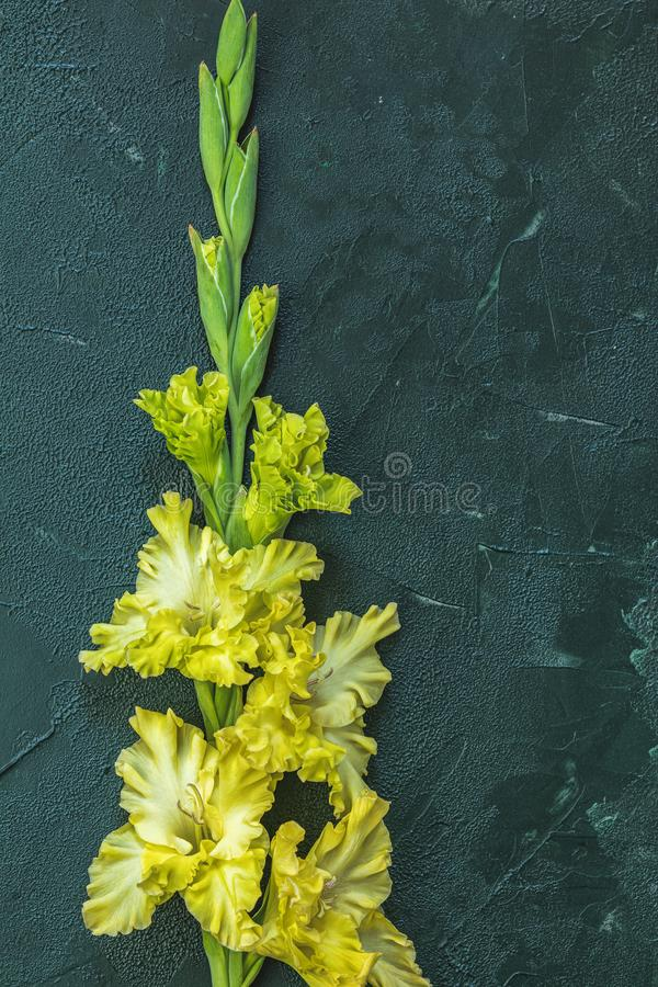Border frame made of yellow gladiolus on green concrete background. Flat lay composition with beautiful gladiolus flowers on dark green concrete background stock photo