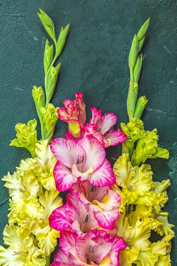 Border frame made of yellow and pink gladiolus on green concrete background. Pattern of gladiolus with space for your text,. Holiday greeting card. Valentine&# stock photography