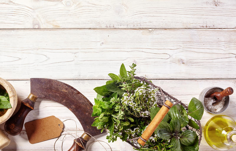 Border of fresh culinary herbs and mezzaluna knife. Border of fresh culinary herbs in a wire basket, a pestle and mortar and mezzaluna knife alongside coarse royalty free stock images