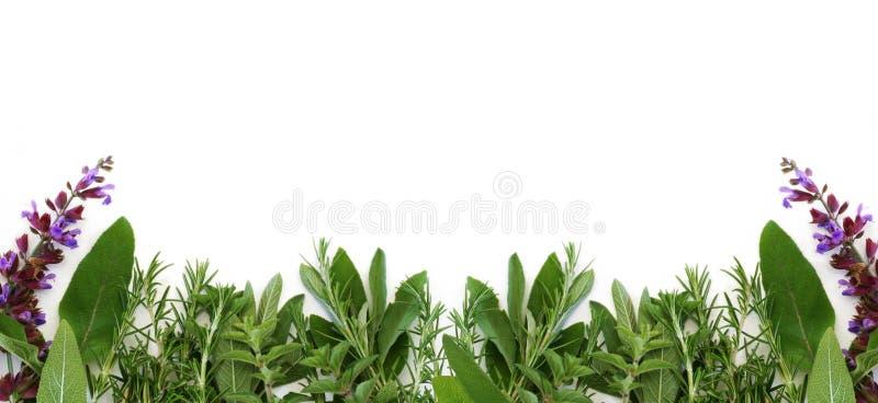 Border of Fresh Herbs royalty free stock photography