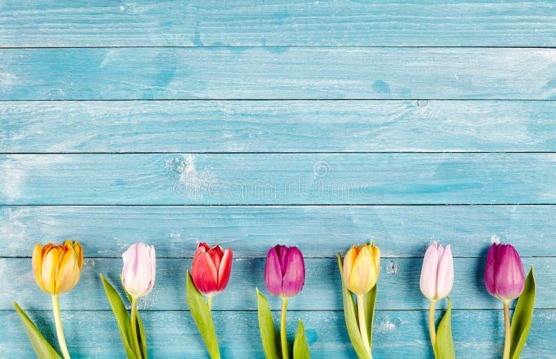 Border of fresh multicolored spring tulips stock image