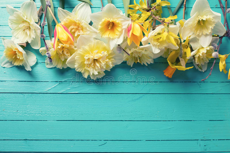 Border from fresh spring yellow narcissus, tulips flowers royalty free stock images