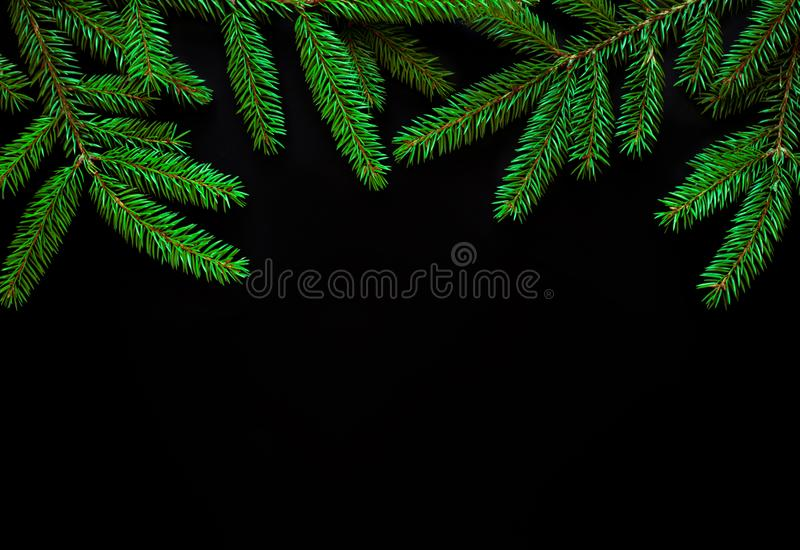 Border of green fir tree branches on black background royalty free stock image