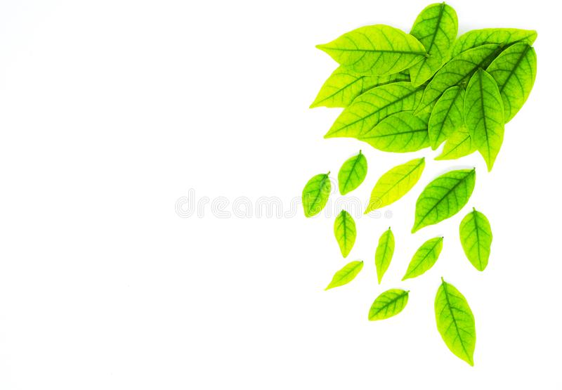 Border with Green leaf, background for design on white paper royalty free stock image