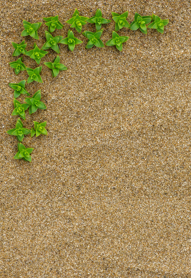 Border Of Green Plants On The Sand Stock Photography