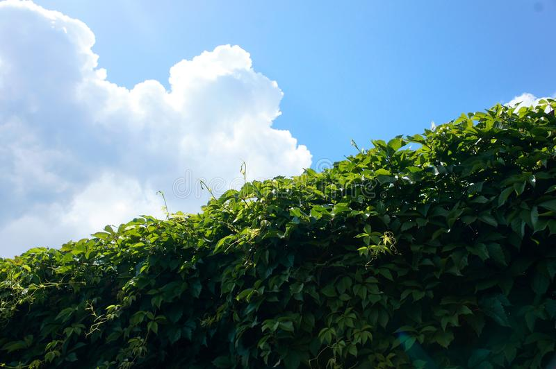 Border of greenery and sky stock image
