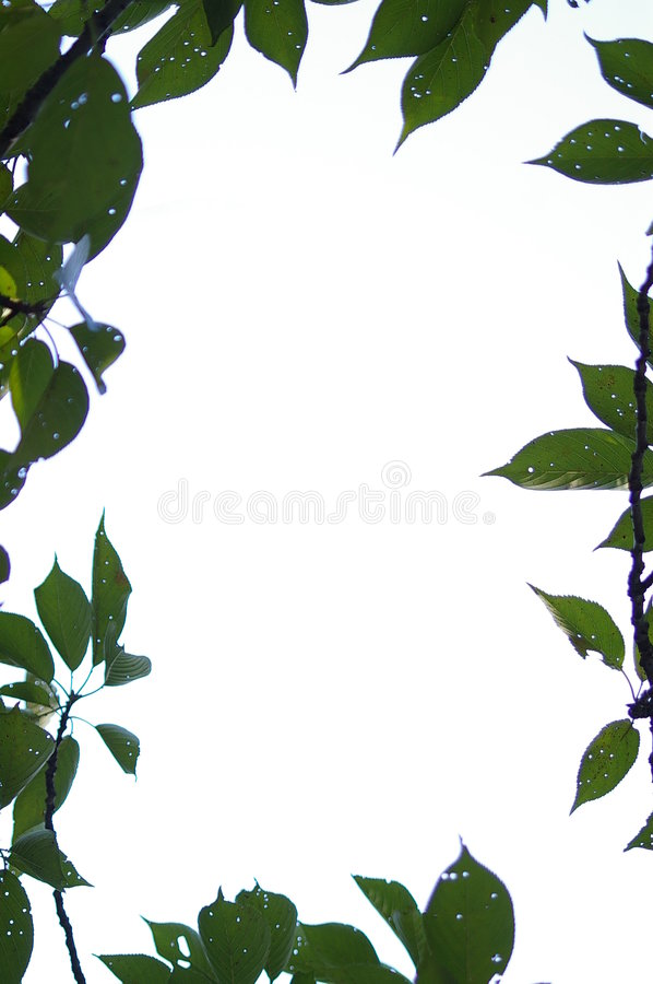 Border Of Leaves Stock Images