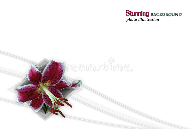 Download Border Line Stargazer Lily stock photo. Image of flower - 30922422