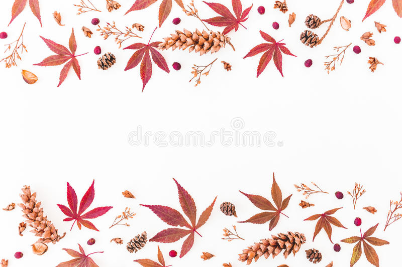 Border made of autumn leaves, dried flowers and pine cones on white background. Flat lay, top view, copy space. stock image