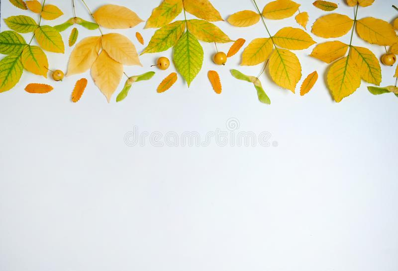 The border is made of yellow leaves, maple seeds, small yellow apples on a white background. royalty free stock photography
