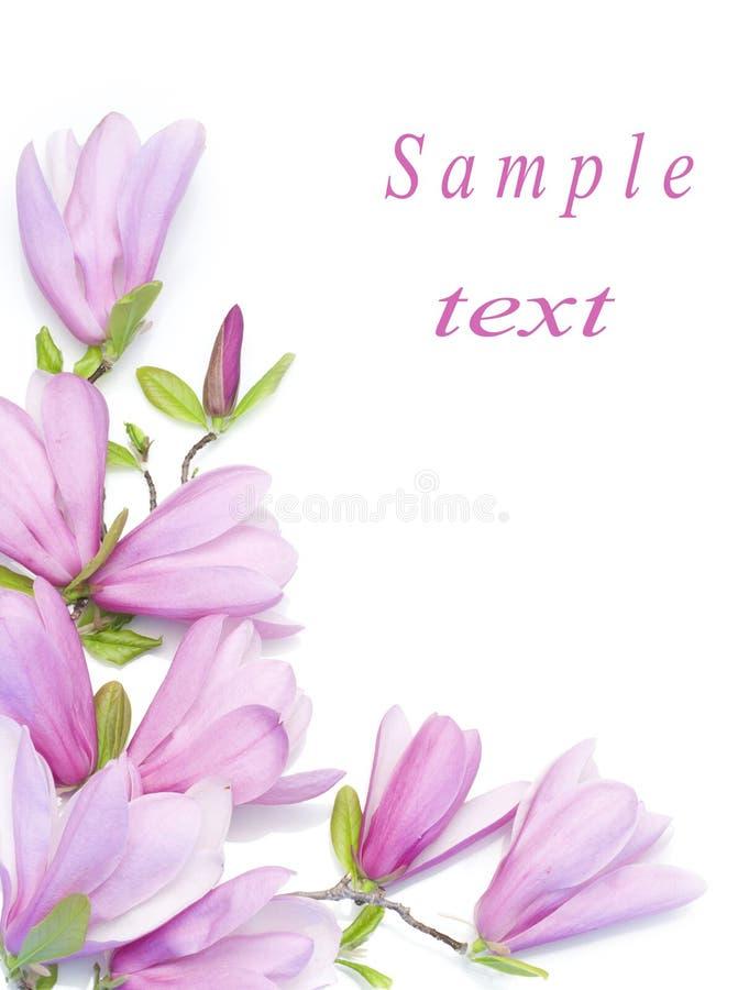 Border of magnolia clusters