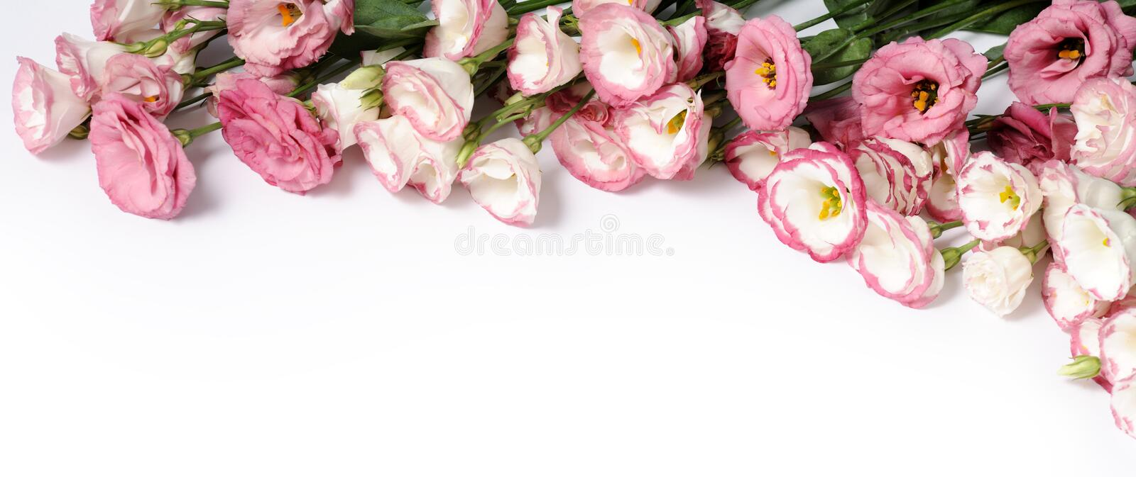 Border of pink flowers. On white background royalty free stock images