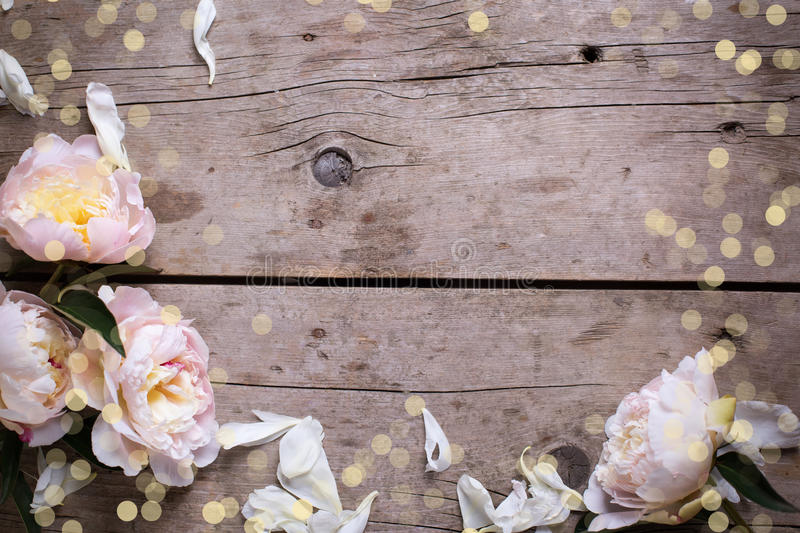 Border from pink peonies flowers and petals on aged wooden background. Flat lay. royalty free stock images