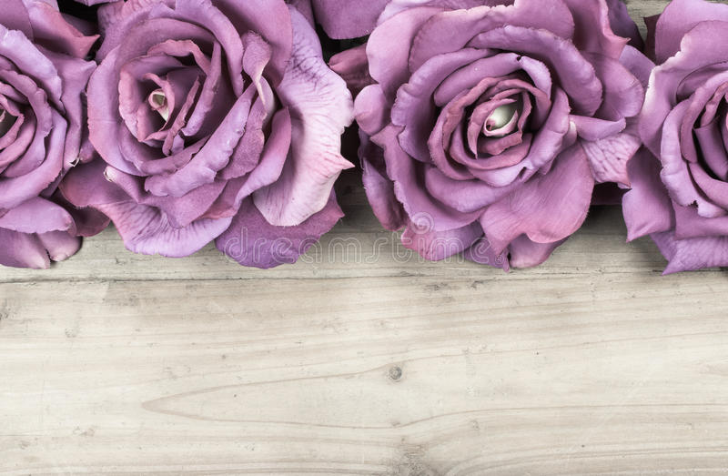 Border purple roses. Purple roses on wood background. Overhead view of flower buds with space for text at the bottom stock photo