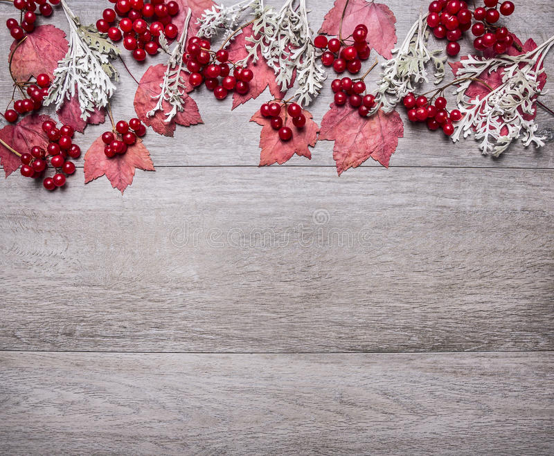 Border with red maple leaves, viburnum berries and autumn scenery on grey wooden rustic background top view close up with text are. Border red maple leaves stock photo