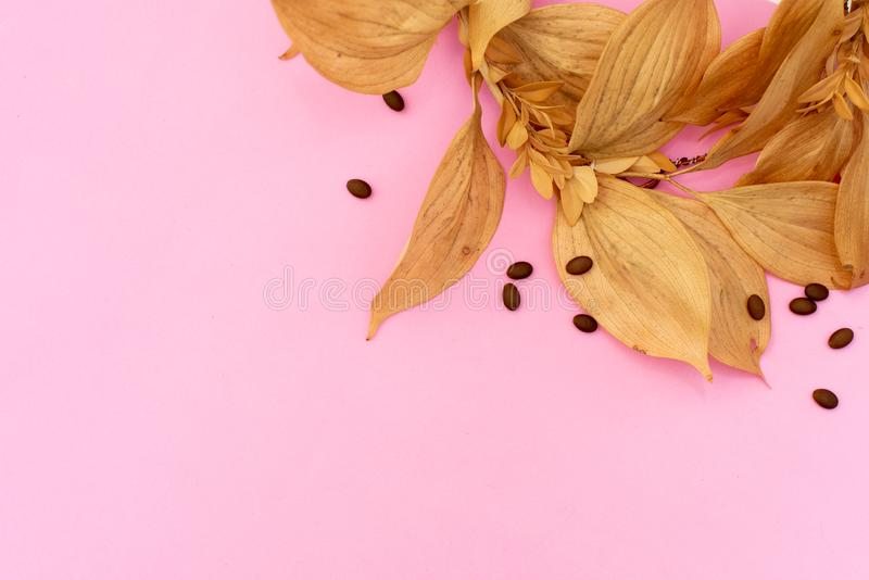 Border of small dry on pink background. Place for text. Flat lay, top view royalty free stock photo