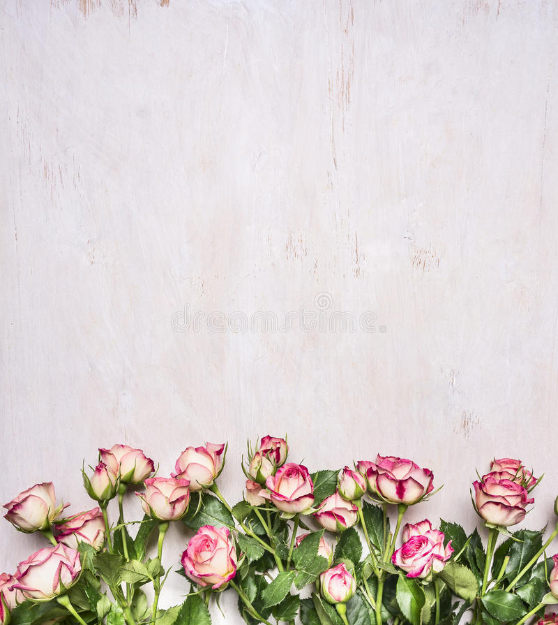 Border, spring shrub roses with leaves on the branches place for text wooden rustic background top view. Border, spring shrub roses with leaves on the branches stock photo