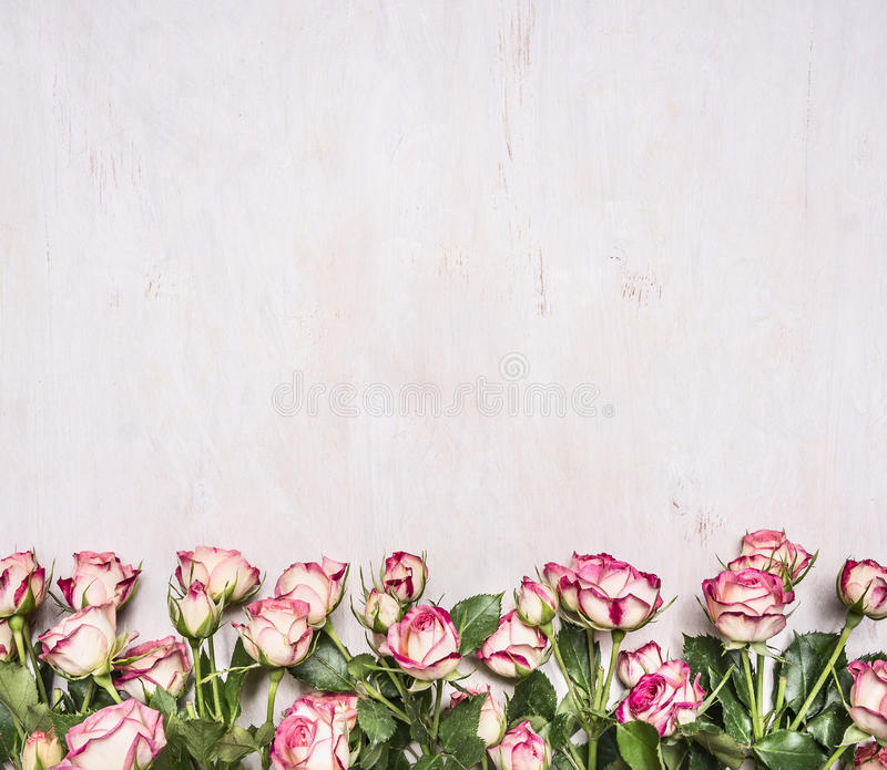 Download Border Of Spring Shrub Roses Banner For Site Wooden Rustic Background Top View