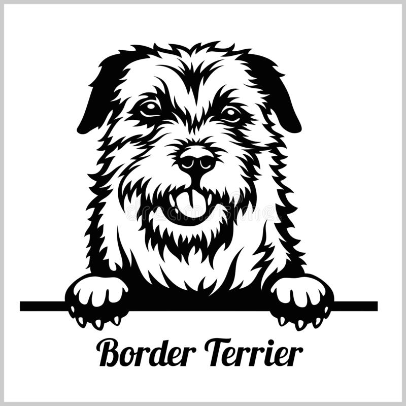Border Terrier - Hunde spähend - Zuchtgesichtskopf lokalisiert auf Weiß lizenzfreie abbildung