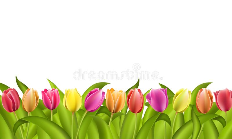 Border on white with copy space of fresh red and orange spring tulips with green leaves. Border on white with copy space of fresh red and orange yellow and stock illustration