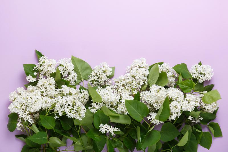 Border from white lilac flowers on purple background. Bouquet of lilac. stock image